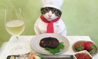 Vakarienė su kate