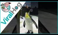 Pingvinai žaidžia su muilo burbulais