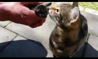 Katė saugo savo kačiukus
