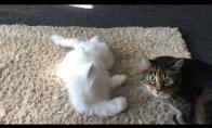 Kačių reakcija į naują namų gyventoją