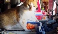 Benamė katė apsigyvena gaisrinėje