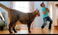 Katės reakcija į mirštantį šeimininką