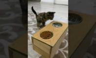 Speciali šėrykla neįgaliam katiniukui