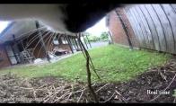 Katės gyvenimas su GoPro