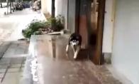 Kai šuo užstringa