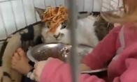 Katė spagetis