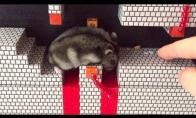 Žiurkėnas Mario žaidime