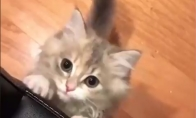 Keisčiausias kačiuko miaukimas