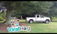 Sunkvežimis prieš medį
