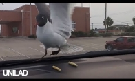 Negailestingas pokštas paukščiams