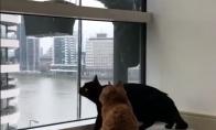 Katėms patinka langų valymas
