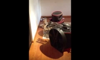 Šuo dainuojantis bliuzą