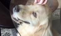 Šuo gauna masažą