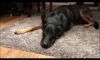 Šuo dainuoja bliuzą, vėl