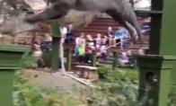 Įspūdingas gyvūnų pasirodymas