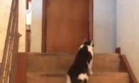 Katė įjungia šunį