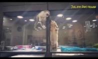 Didysis kačiuko pabėgimas