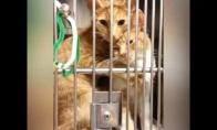 Katė pas veterinarą guodžia sesutę
