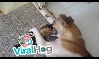 Ančiukas ir šuniukas - geriausi draugai
