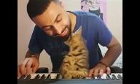Katinas mėgaujasi šeimininko grojimu
