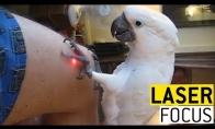 Lazerio švieselė vs. Gyvūnai