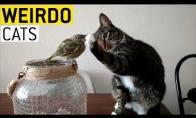 Kai katės elgiasi labai keistai