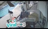 Šunelis išgelbsti savo draugą