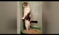Keistų katiniukų video rinkinys
