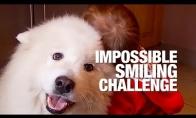 Mieli gyvūnai, priverčiantys nusišypsoti