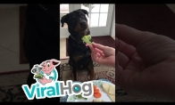 Išrankus šunelis
