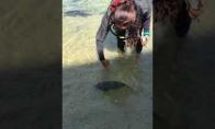 Dresuota žuvis