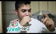 Beatboxas su papūgėle