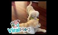 Labai mielas šuniukų buvimas kartu