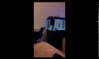 Katinui nepavyko užšokti ant akvariumo