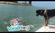 Šuniukas susidraugauja su delfinu
