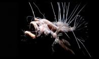Baisiausios ir keisčiausios jūrų būtybės
