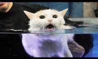 Katės prieš vandenį