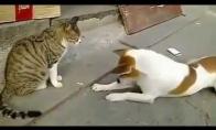 Katės prieš šunis