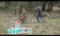 Vyras davė kengūrai į snukį, kad išgelbėtų savo šunį
