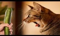 Katinai vs. Agurkas