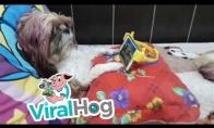 Šuo žiūri teletabius