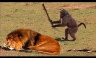 Gyvūnai gali būti šūdžiais irgi