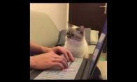 Katinas vs. Kompiuteris