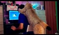 Didelė katė mano namuose