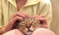 Pats geriausias masažas katinui