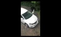 Lokys įsibrovė į stovintį automobilį