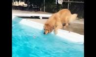 Šuo bando išsiimti žaisliuką iš baseino, neįkrisdamas į jį