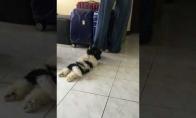 Šunytis nenori išleisti savo šeimininko