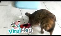 Jei Neymaras būtų katinu