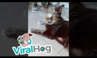 Katinas narkomanas